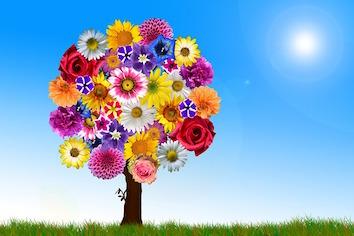 arbre fleur